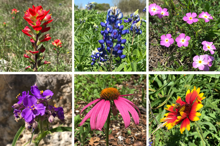 Wildflower Identification Guide