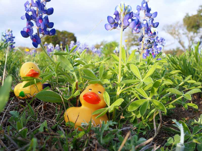 Literacy Highland Lakes Rubber Ducky Race