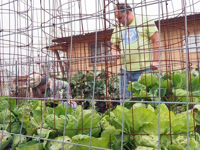 Highland Lakes Master Gardener Association