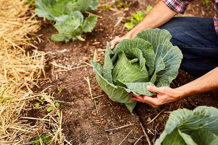 Rules of organic gardening