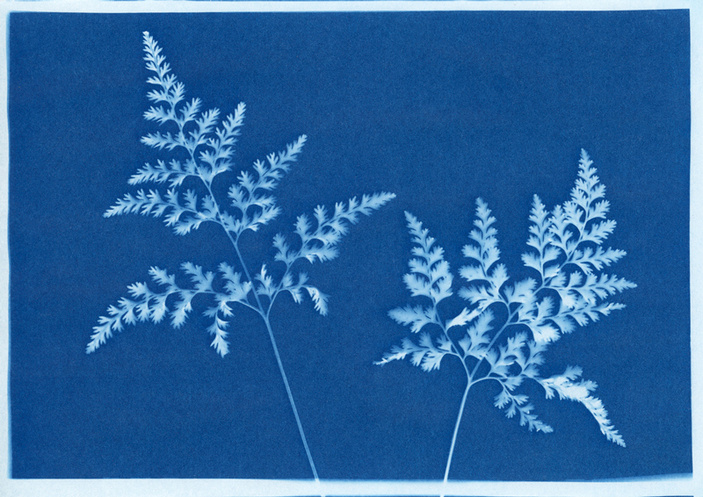 Cyanotype making at Science Mill
