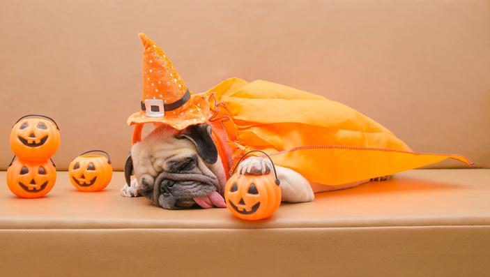 HOWLoween pet costume contest