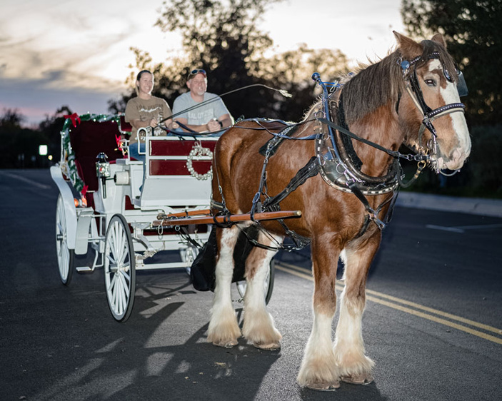 Christmas carriage ride in Marble Falls