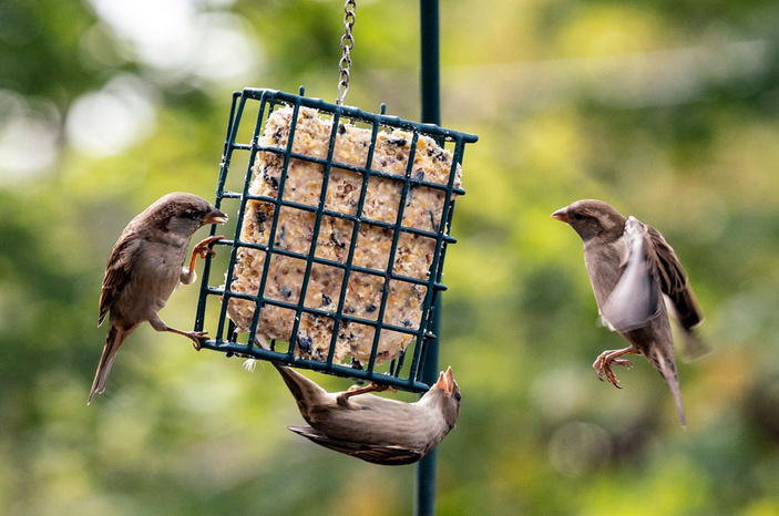 Suet cake recipe for birds