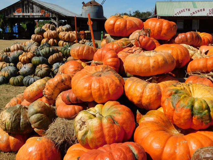 Sweet Berry Farm pumpkin patch