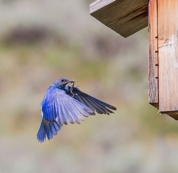 Invite birds into your garden
