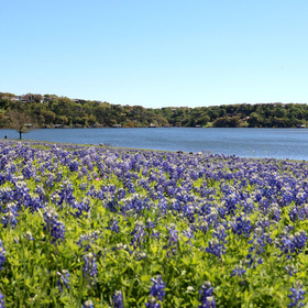 Turkey Bend Recreation Area Bluebonnets