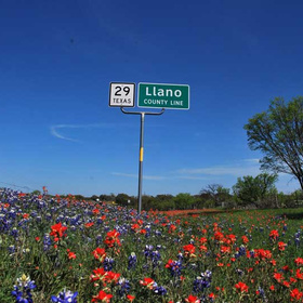 Llano County wildflowers