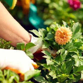 Llano County Master Gardener