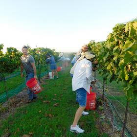 Rustic Spur Vineyards in Fredericksburg