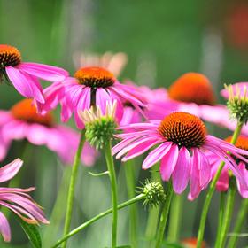 Native Texas plants