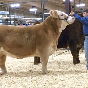 Llano Junior Livestock Show