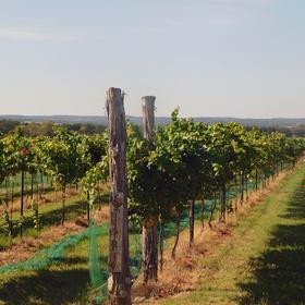 Rustic Spur Vineyards