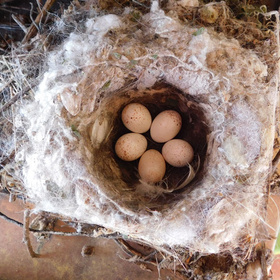 Protected nesting birds