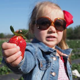 Sweet Berry Farm