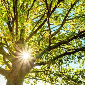 How much sun does your garden spot get?