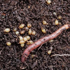 Worms in the garden