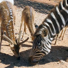 Exotic Resort Zoo in Johnson City