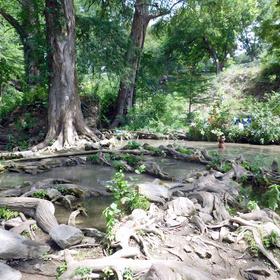 Cypress trees at Krause Springs