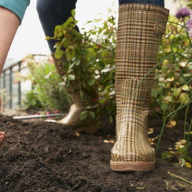 Plant flower seeds and vegetables in January