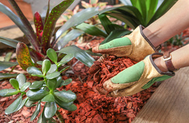 IN THE GARDEN: Ant Solutions, Mulch to Conserve Water, and Other Summer Duties