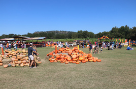 Sweet Berry Farm Opens for Harvest of Fall Fun