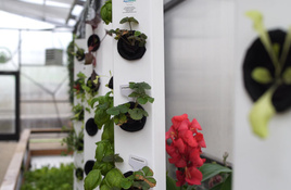 Science Mill Unveiling Sustainable Aquaponics Greenhouse