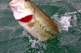 Land a lunker at Lake LBJ Bass Tournament