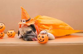 WHAT'S HAPPENING? October festivals and HOWLoween fun