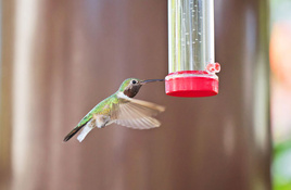 IN THE GARDEN: Time to feed the hummingbirds