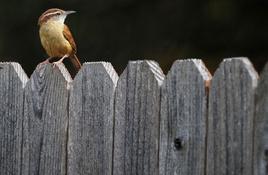 Backyard birding makes a great scavenger hunt