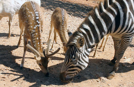 Take a self-guided tour through Exotic Resort Zoo