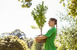 IN THE GARDEN: 10 tips when planting new trees