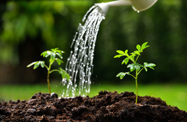 IN THE GARDEN: When and how to water in the summer