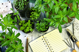 IN THE GARDEN: Journaling and composting