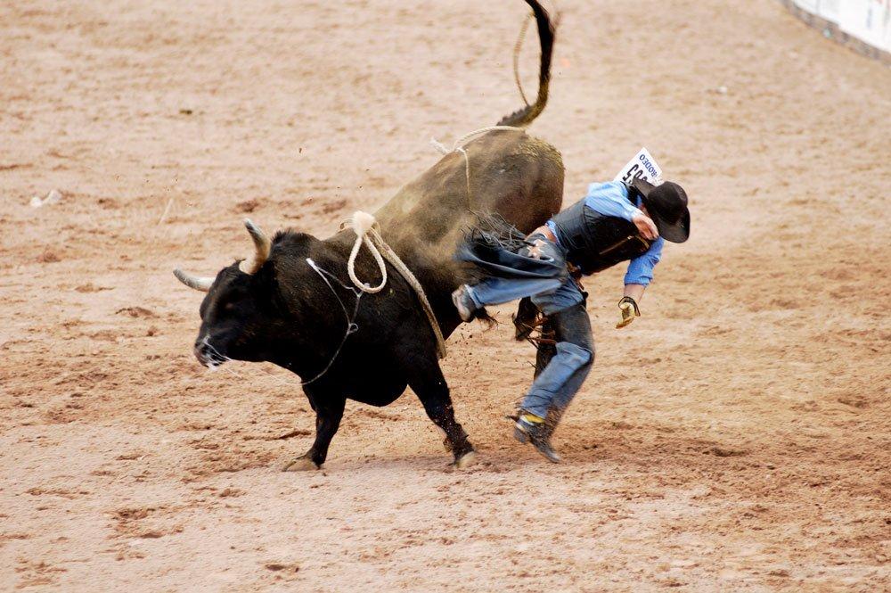 Bucking bulls, Texas longhorns and more in Llano