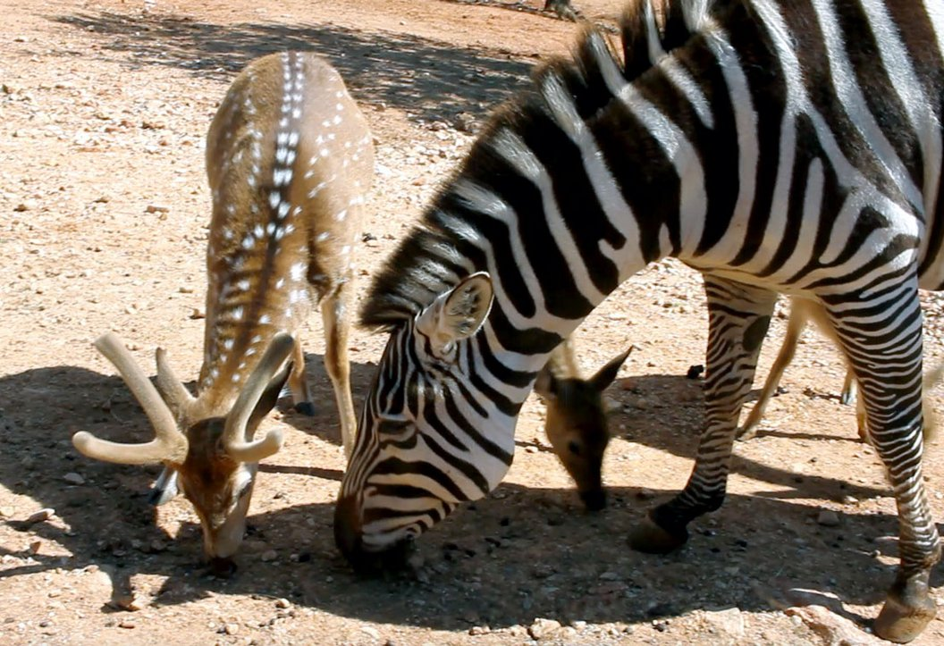 Guided tours return to Exotic Resort Zoo