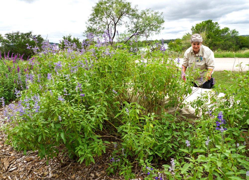 Inks Lake State Park volunteer plants for pollinators