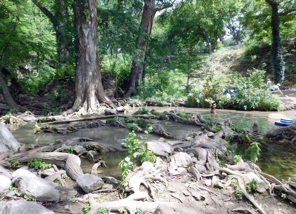 Virtual Highland Lakes: Cypress trees