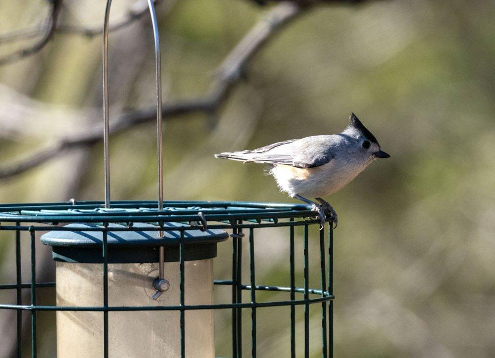 Highland Lakes bird blinds
