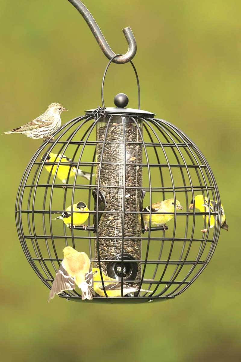 invite birds to your winter garden