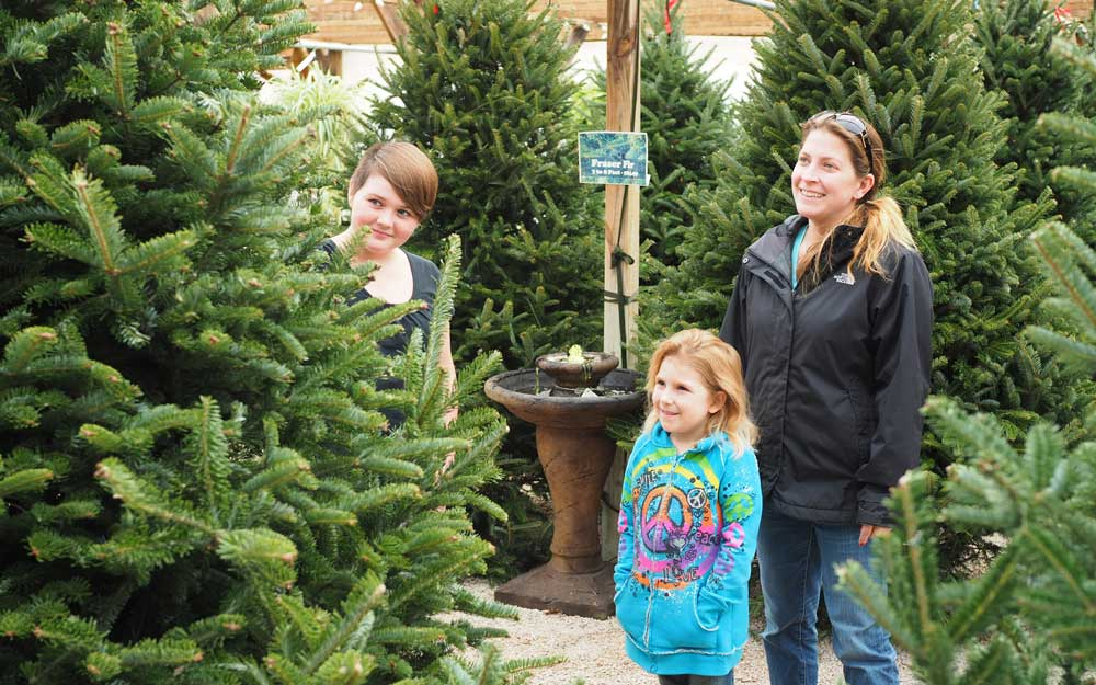 Real Christmas trees are easy-to-maintain options