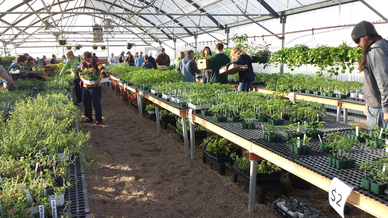 Burnet Middle plant sale March 22 on green lavender, green beets, green bonsai, green bushes, green perennial, green garden design, green flowers, green tulips, green nature, green gardening, green shrubs, green butternut squash,