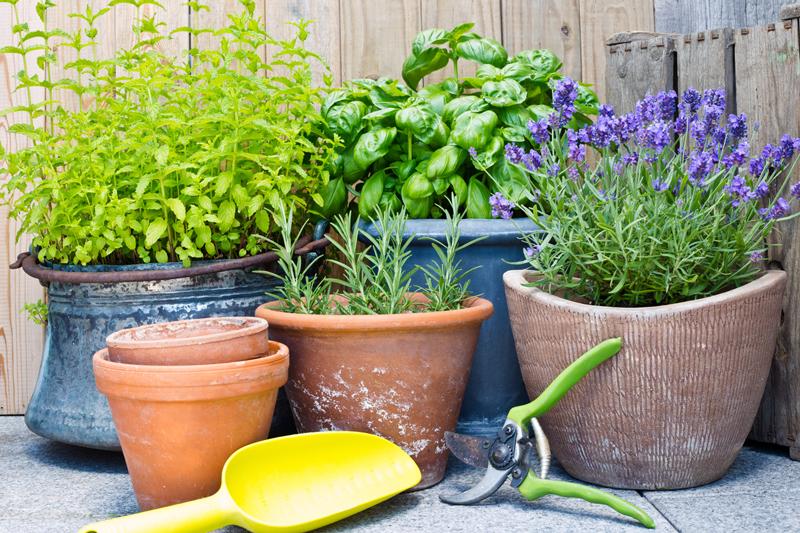 In The Garden Repealing Pests And Bugs Dark Sky Lighting