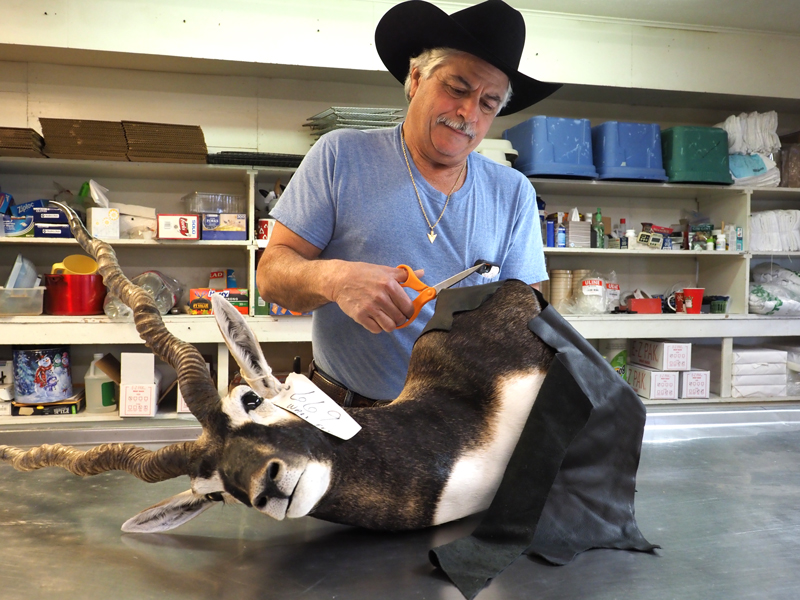 It's all in the details for taxidermist Robert Griffith