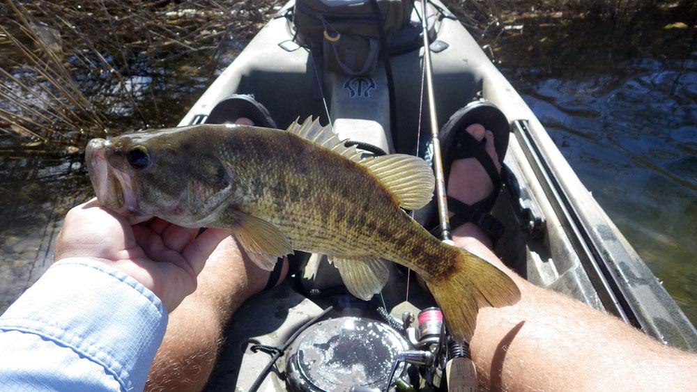 Free Fishing Day In Texas