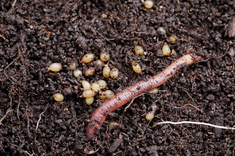 Worms At Work In Your Garden